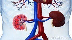 Ліки від холестерину небезпечні для нирок