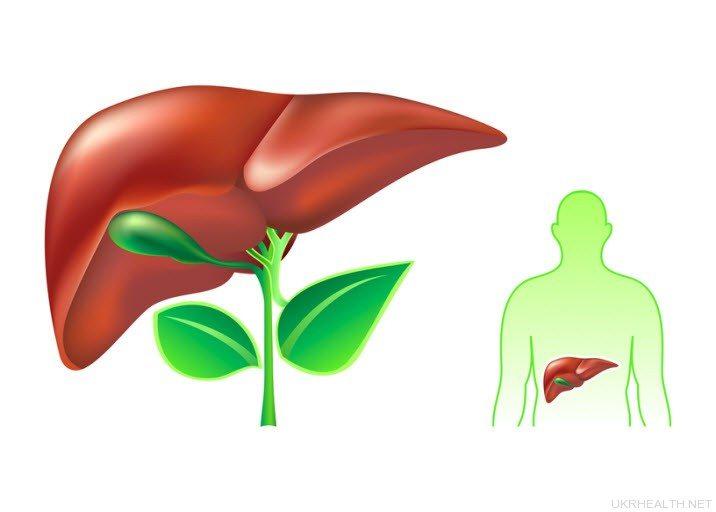 Анатомія печінки