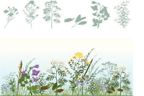 Цілющі трави