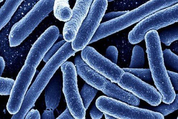 резистентність бактерій