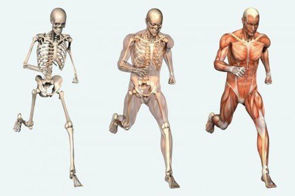 тіло людини