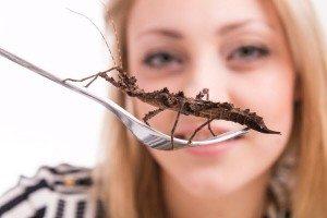комахи для їжі