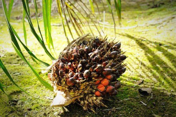 Продукти з пальмовою олією