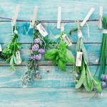 пряні трави користь