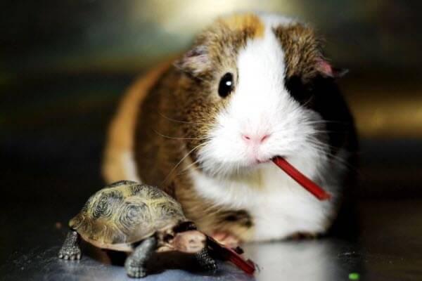 Хвороби від домашніх тварин