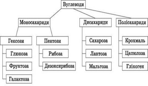 вуглеводи - класифікація