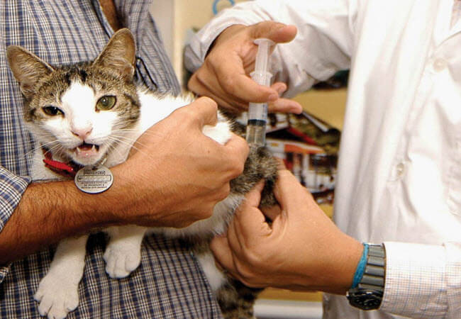 Вакцинація тварини