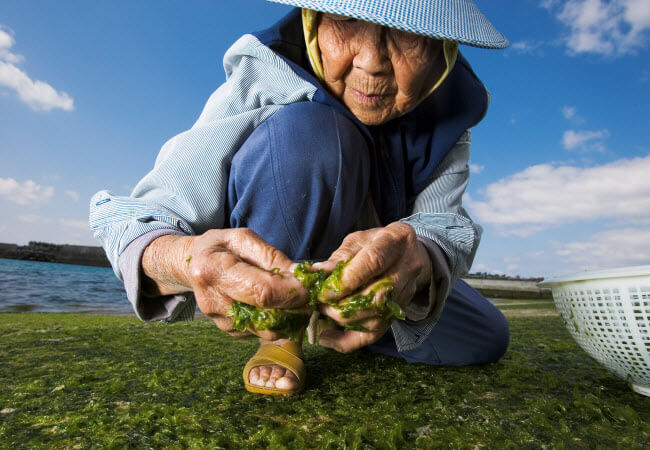 """Excerpted from National Geographic 2005 """"The Secrets of Long Life"""""""