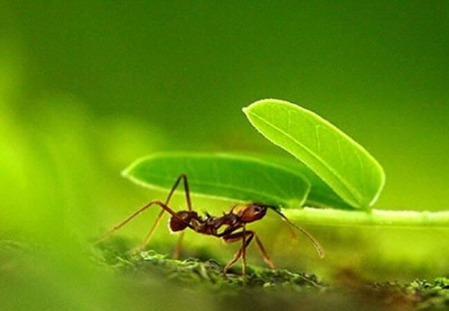 Позбутися від мурашок без хімії