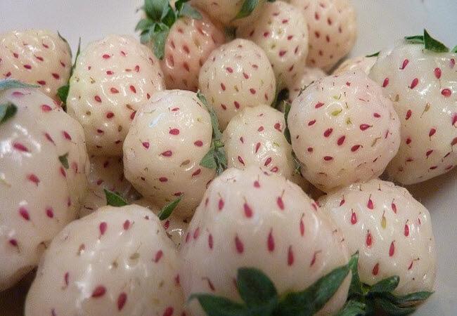 Вчені виявили, що білі сорти полуниці не викликають алергії