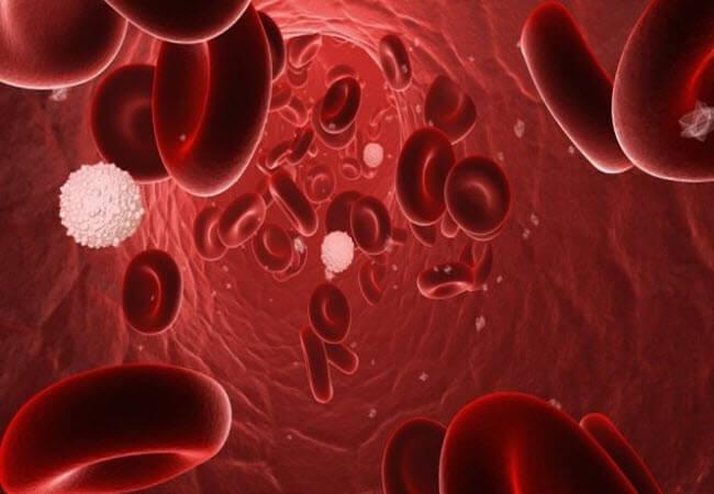 Лімфоцити