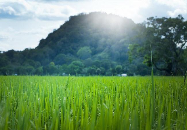 алергія на трави та пилок