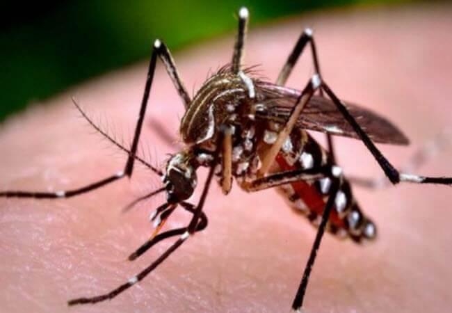 німкені ампутували ноги після укусу комара
