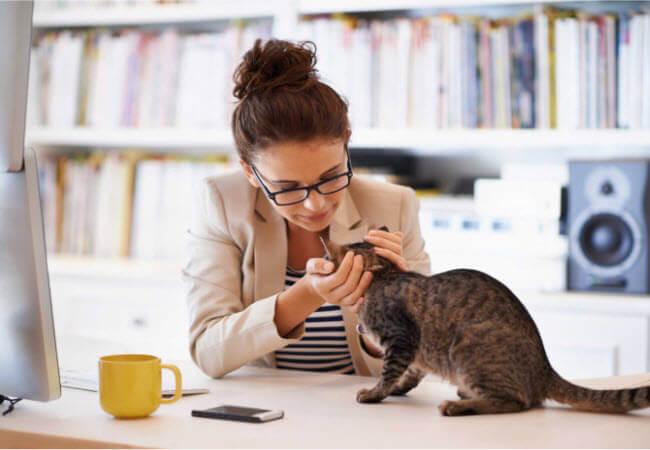 Спілкування з кішкою