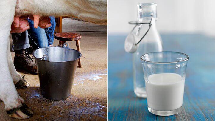 Сире коров'яче молоко