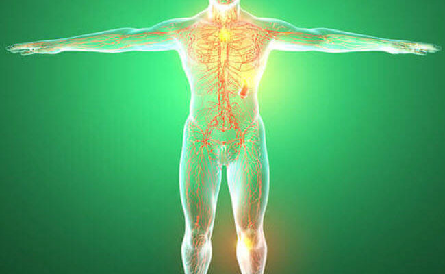 Органи і лімфатична система