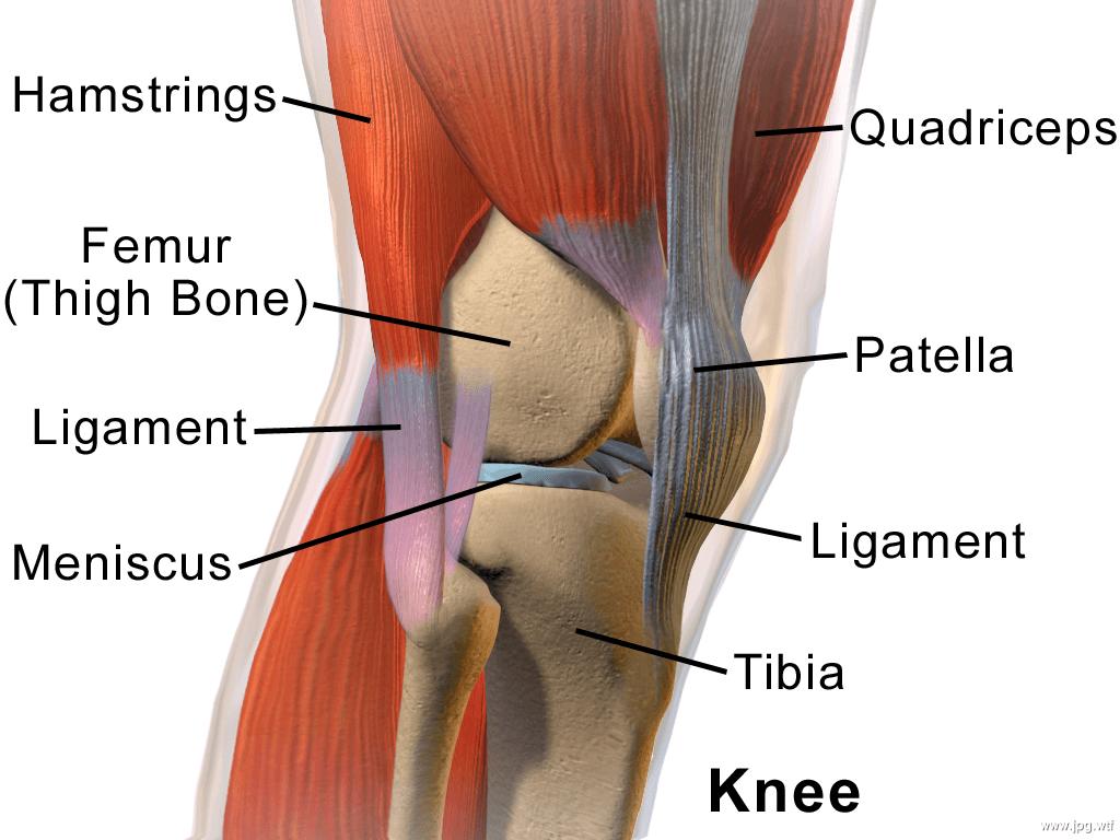 Склад коліна