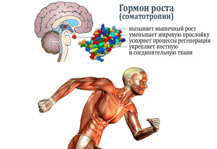 Ефекти соматотропіну