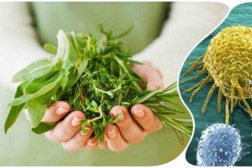 Трави проти раку