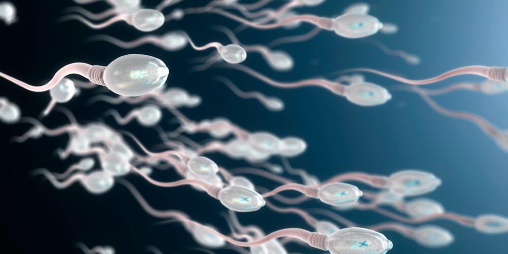 Сперматозоїди