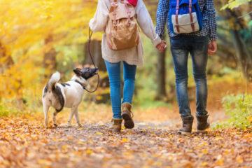 Прогулянка в лісі