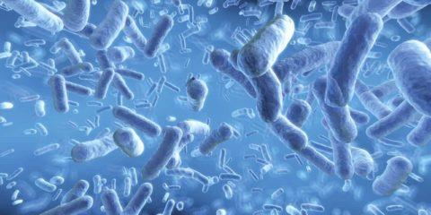 мікрофлора кишечника