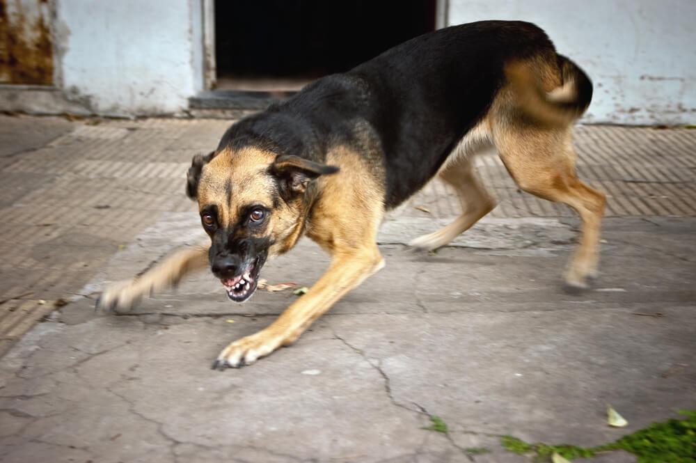бродяча собака