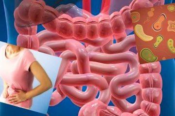 Пробіотики і кишечник