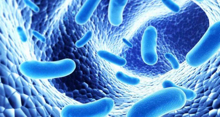 Бактерії в кишечнику