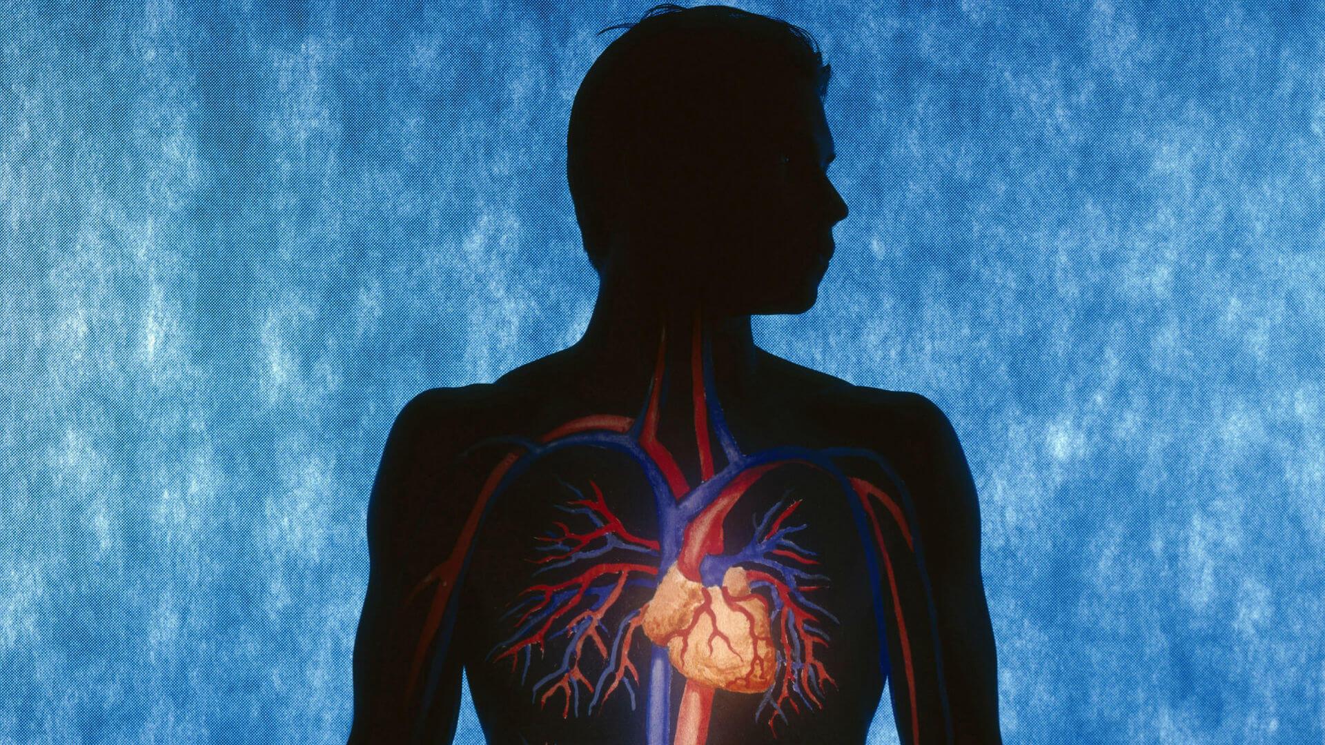 Серце та судини