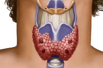 Щитовидна
