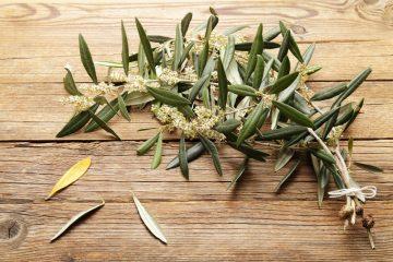 оливкове листя