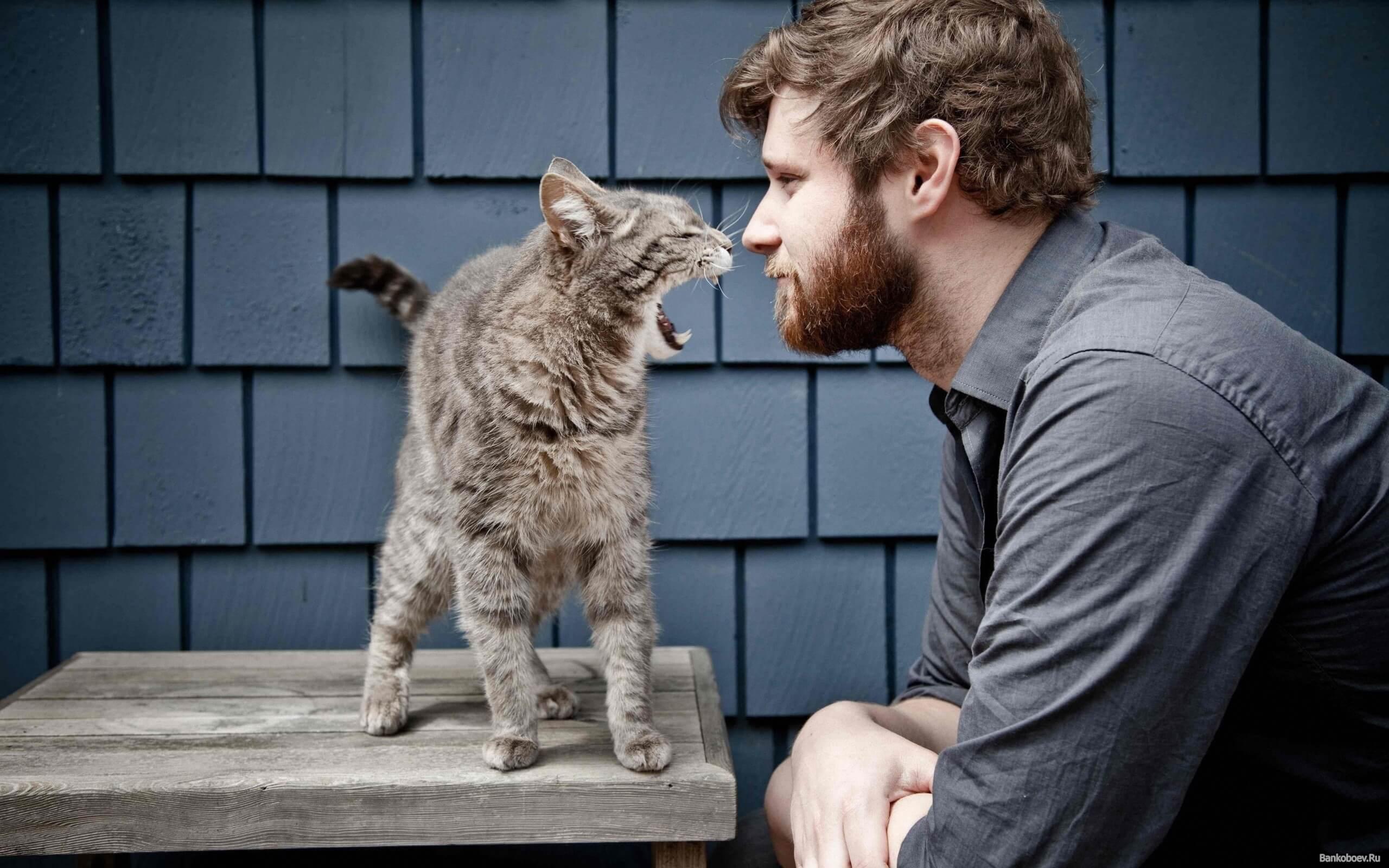 Чоловік і кіт