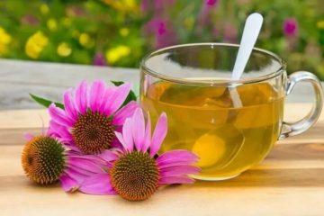 чай з ехінацеєю