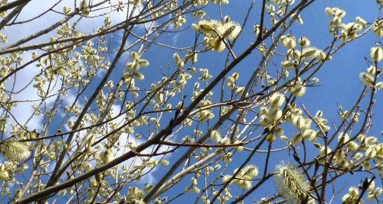 Рання весна