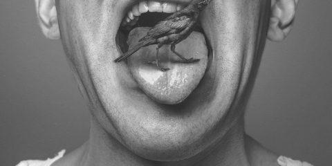 Птах в роті