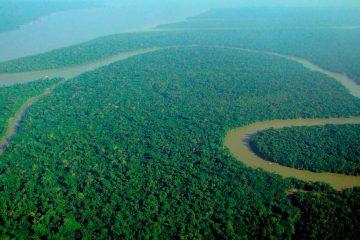 Ліси Амазонії