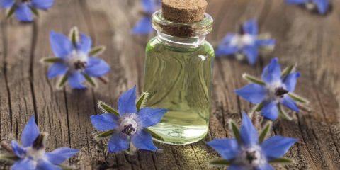 олія насіння огірочника