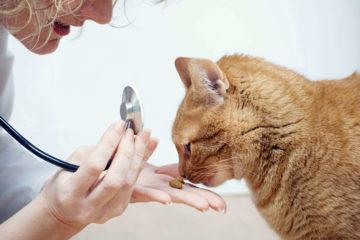 Лікувальний корм для кішок