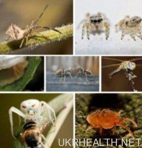 Інсектофобія - боязнь комах
