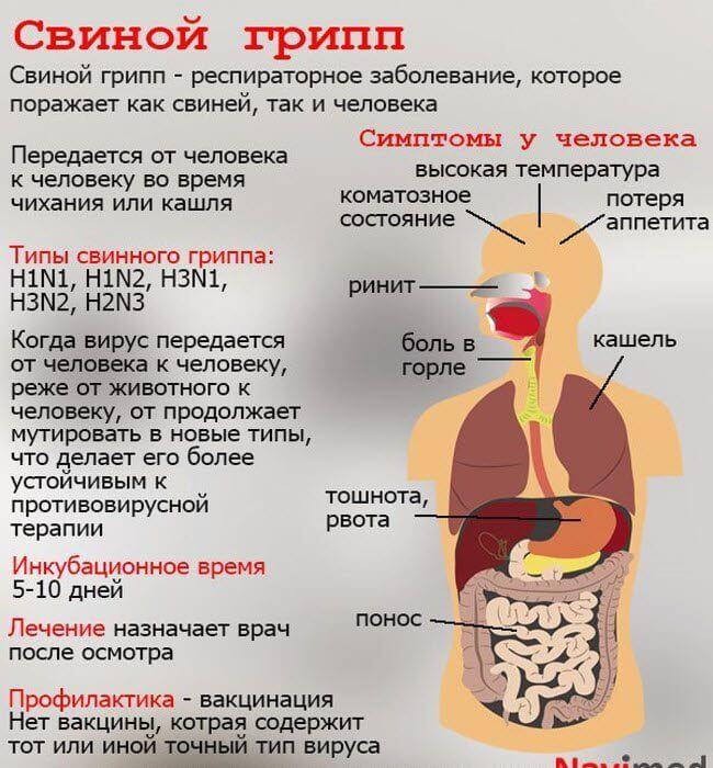 Свинячий грип в Україні - профілактика і лікування